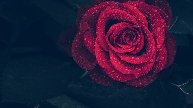 Poesie d'amore in romanesco